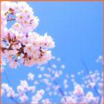 3月の祝日といえば春分の日!決め方や由来は?お彼岸の意味は?