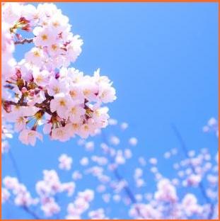 3月の祝日といえば春分の日!決...