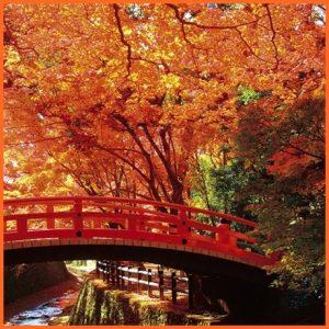 秋分の日_